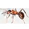 Biologia das Formigas